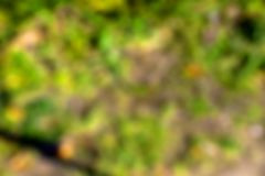 Blurred Camo Bokeh Background. A computer generated blurred camo bokeh background royalty free stock photo