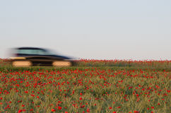 Blurred car in a poppy field Royalty Free Stock Photography