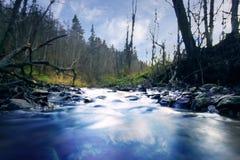 Blurred che congela poco fiume della foresta Immagini Stock Libere da Diritti