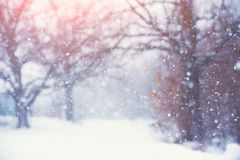 Blurred christmas background with trees, falling snow stock images