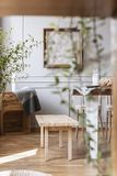 Blurred close-up of a plant with a wooden bench in the background in a rustical daily room interior. Real photo royalty free stock image