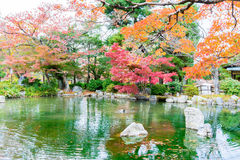 Blurred- Colorful of autumn leaves with reflection  in the pond. Blurred - Colorful of autumn leaves with reflection in the pond at Maruyama Park, Kyoto, Japan Royalty Free Stock Photos