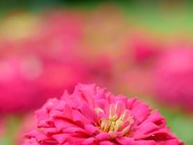 Blurred colorful flowers in the garden, background for beautiful wallpaper