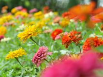 colorful flowers in the garden, background for beautiful wallpaper