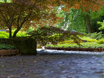 Blurred creek flow in park landscape Royalty Free Stock Images