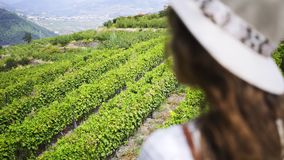 Woman looking at field of vine plants on hill stock video footage