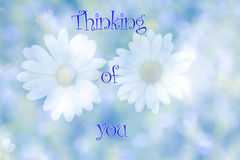 Blurred daisy flowers on natural background with the text Thinking of you. Stock Image