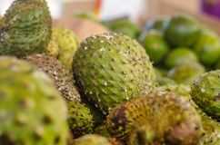 Blurred and defocus shot image of exotic tropical fruit, soursop display for sell. In market with noise and grain effect Stock Image