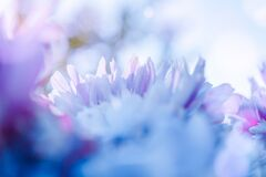 Free Blurred Delicate Petals Stock Images - 183571434