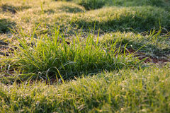 Blurred dew grass Stock Photo