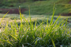 Blurred dew grass Royalty Free Stock Images