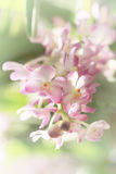 Blurred dream image of pastel pink Ascocentrum orchid flower, sweet toned and soft focus. Stock Photography