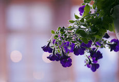 Blurred dreamy flower Stock Images