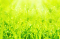 Blurred dreamy soft focus Spring or summer abstract nature backg. Round with grass and bokeh lights Royalty Free Stock Images