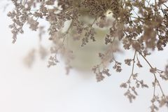 Blurred of dried flowers in a vase. Background Stock Photography