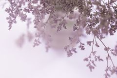Blurred of dried pink flowers. In a vase background Stock Photos