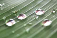 Blurred drops Royalty Free Stock Photography