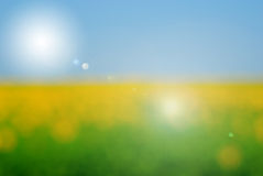 Blurred field Royalty Free Stock Photography