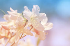 Blurred floral backgound Royalty Free Stock Photos