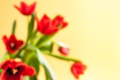 Blurred floral background with red tulips on yellow background. Blurred floral background with bouquet of red tulips on yellow background stock photos