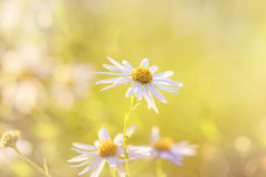 Blurred floral background Stock Images