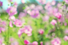 Blurred floral background, spring pink flowers Stock Photo