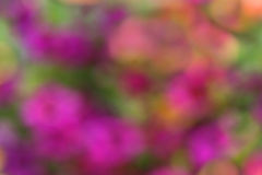Blurred Floral Bokeh Background Stock Photography