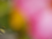 blurred flower Stock Image