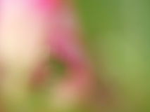 Blurred flower Royalty Free Stock Photo