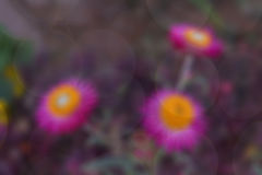 Blurred flower Stock Photo