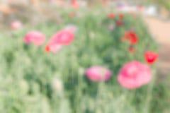 Blurred flower in the garden Stock Photo