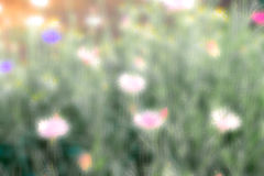 Blurred flower in the garden Stock Photography