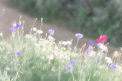 Blurred flower in the garden Royalty Free Stock Images