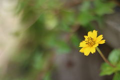 Blurred flower in rainy season royalty free stock image