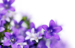Blurred flowers Royalty Free Stock Photo