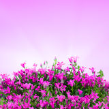 Blurred flowers background Royalty Free Stock Image