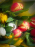 Blurred flowers Royalty Free Stock Images