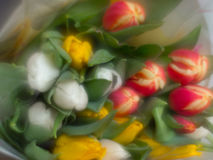 Blurred flowers Stock Images