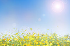 Blurred flowers field with blue sky background Royalty Free Stock Photography