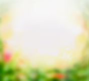 Blurred flowers garden background, frame Royalty Free Stock Photo