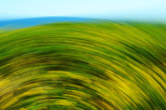 Blurred Flowers and Grass Stock Photography