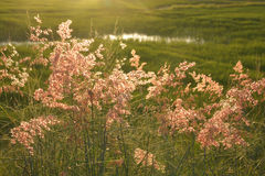 Blurred flowers grass Stock Image