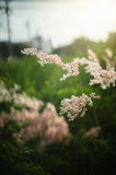Blurred flowers grass in morning or sunset moment Stock Photography