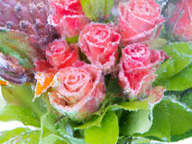 Blurred flowers in ice Stock Photo