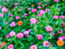 Blurred of flowers Stock Photography