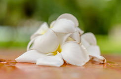 Blurred flowers :Sweet Plumeria (frangipani) flowers on table Stock Photography