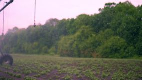 Blurred focus, special watering pivot sprinkler system irrigates small green potatoe bushes, that grow in soil, in rows. On agricultural field. prosess of stock video