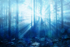 Blurred foggy sun rays with flare in forest Royalty Free Stock Image