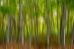 Blurred forest Royalty Free Stock Image