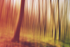 Blurred forest as abstract background of nature Royalty Free Stock Photos